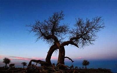 【昆仑山下】抱在一起的树